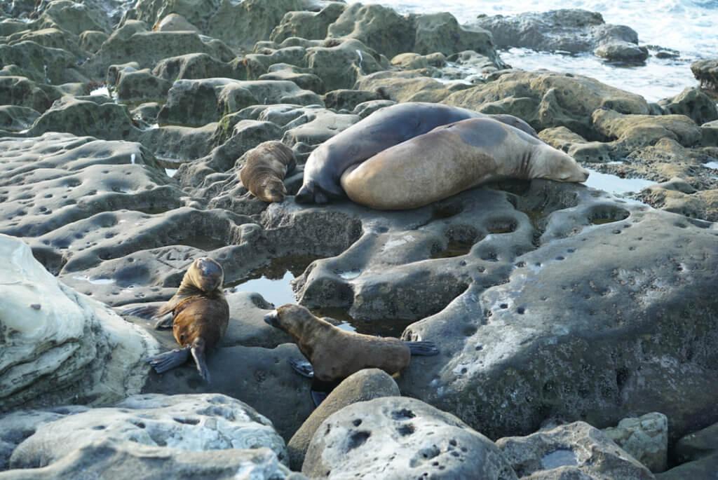 seal rocks at alcohol drug detox counselor