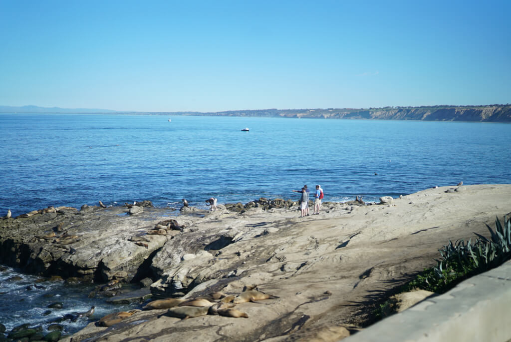 beach walk la jolla cove rehab activity