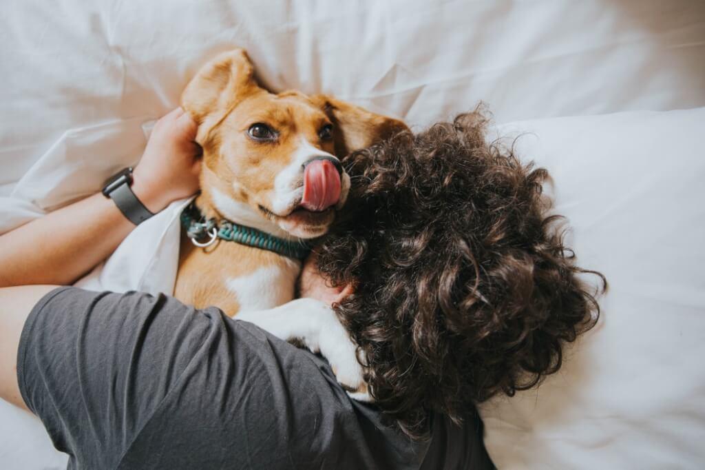 lick tongue dog hair owner dog friendly rehab