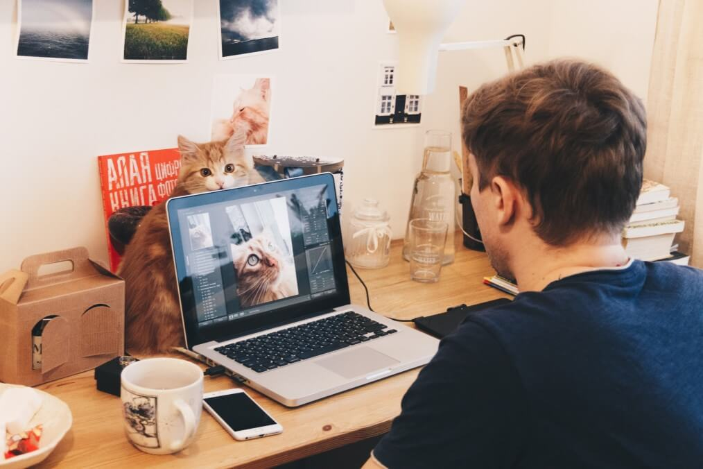 cat zoom call computer man teleconference pet rehabilitation addiction