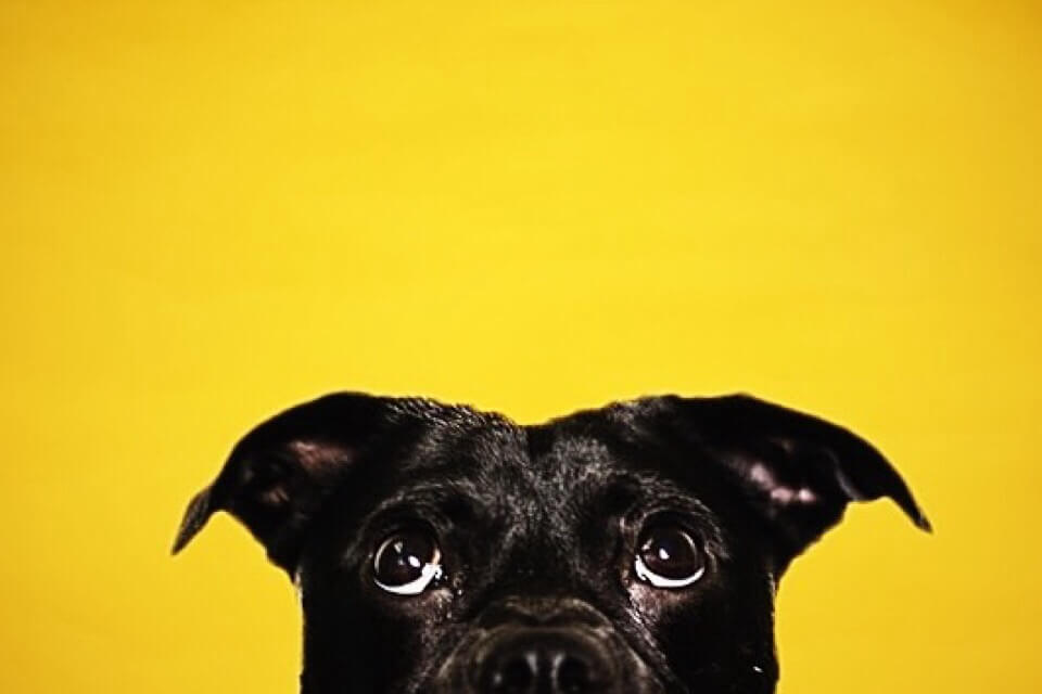 black dog pet rehab friendly eyes sd